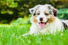 Dog friendly holiday homes for Easter